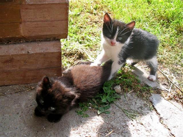 junge Katzen am Sonnenhof am Weissensee in Kärnten Urlaub am Bauernhof